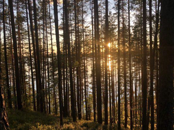Discover Saimaa.
